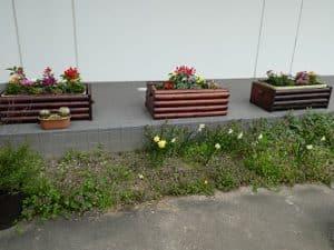 大学構内はカラフルな花々で彩られています